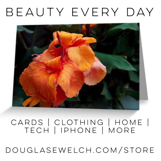 Shop for these Canna Flower cards and much more from Douglas E. Welch