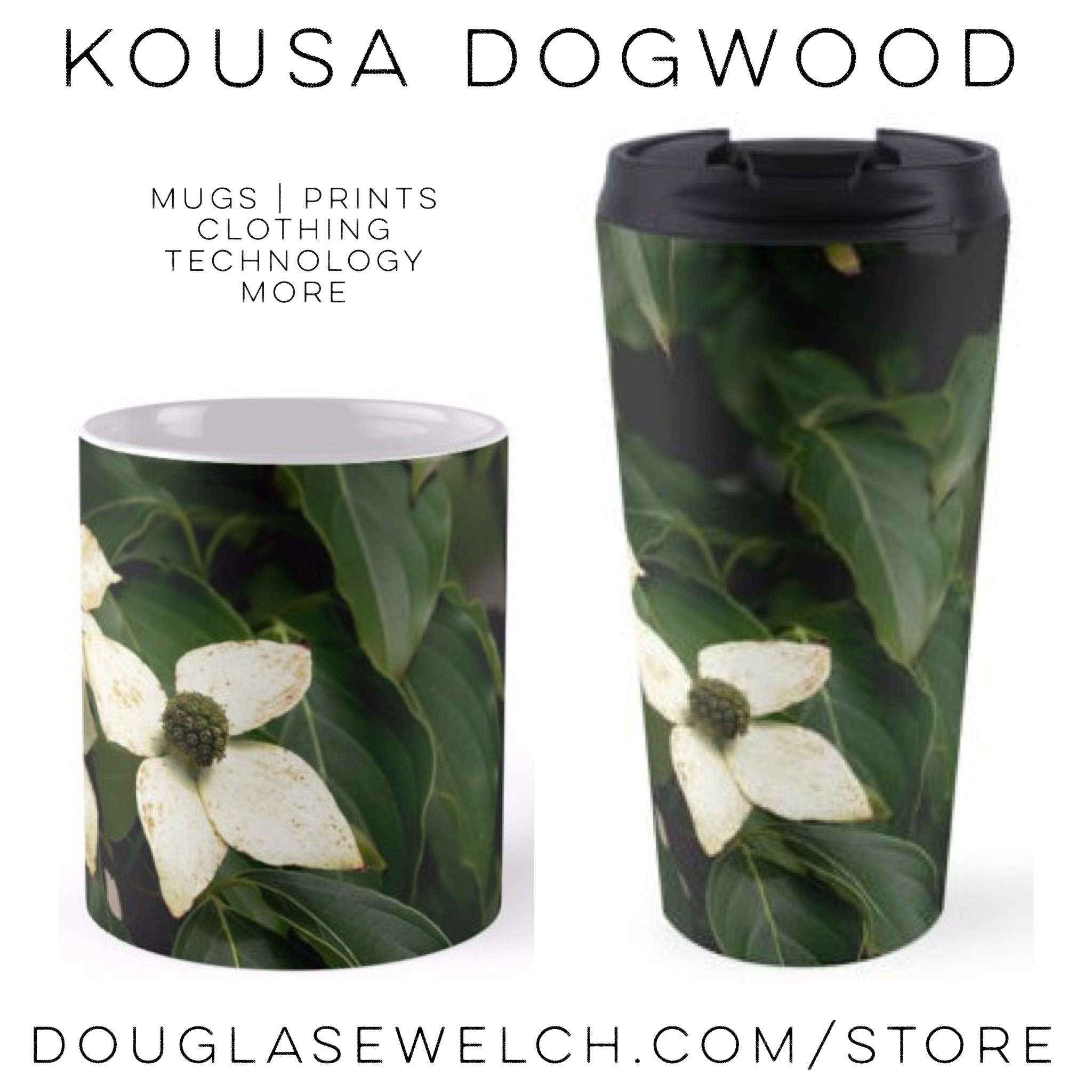 Get these Kousa Dogwood Mugs and Much More! Exclusively from Douglas E. Welch