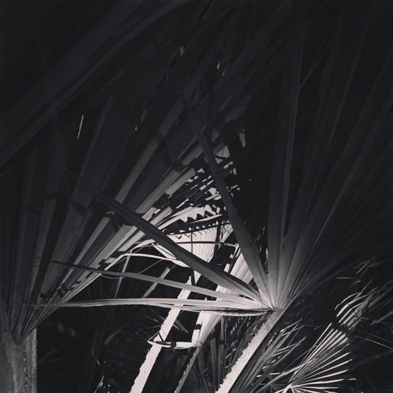 Palms at Night [Photo]