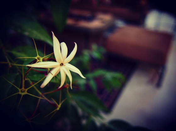Little Flower [Photo]