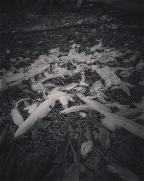 Evidence [Photo]