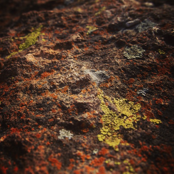 Lichen Up Close [Photo]