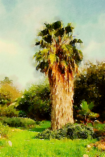 Palm Tree Watercolor from Photo
