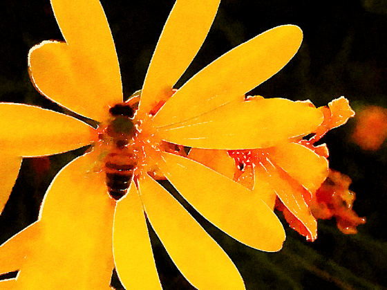 Bee on Yellow Flower Watercolor