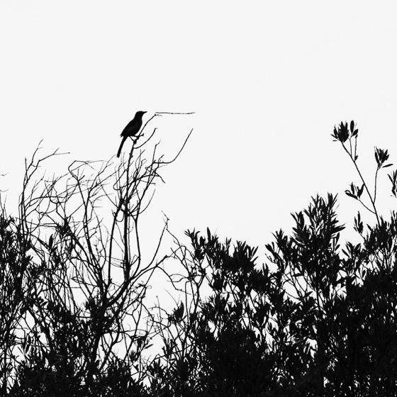 Bird sentinel [Photo]