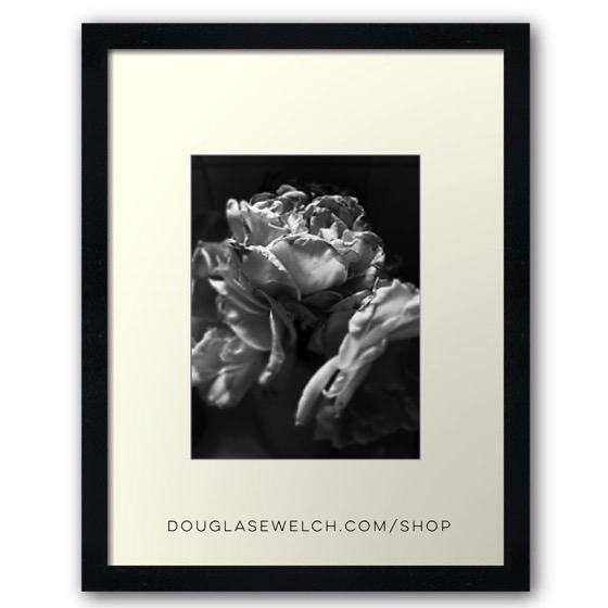 Everything Fades Prints, Cards and Much More!