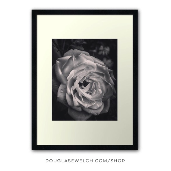 """""""The Last Rose"""" Prints, Housewares, iPhone and Laptop Cases and More!"""