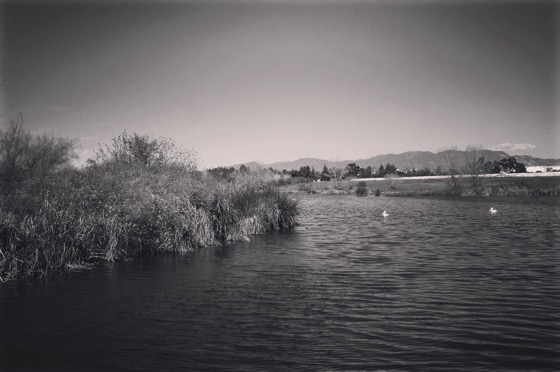 Sepulveda Basin Wildlife Reserve [Photo]