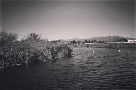 Sepulveda Basin Wildlife Reserve [Photo]