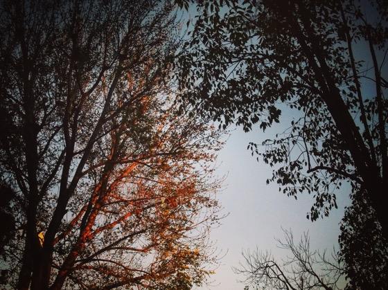 Sunset on the Ash Tree