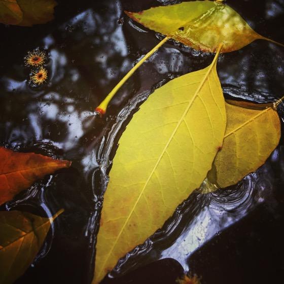 Winter Leaves [Photo]