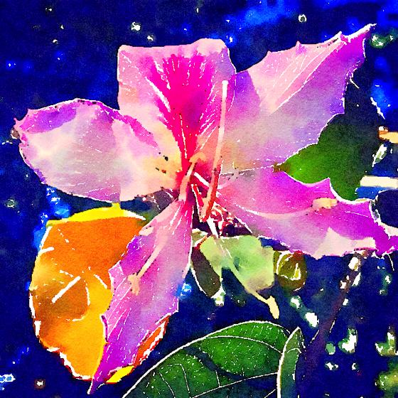 Bauhinia Flower Watercolor