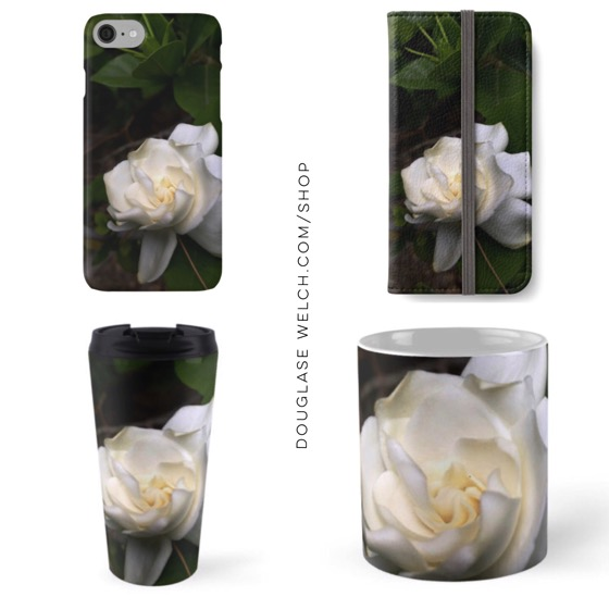 Get these Gardenia Blossoms to brighten your phone, office and commute