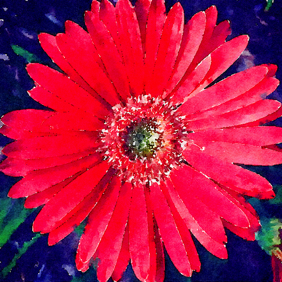 Gerbera Daisy in Watercolor