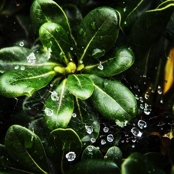 Raindrops On Cobwebs