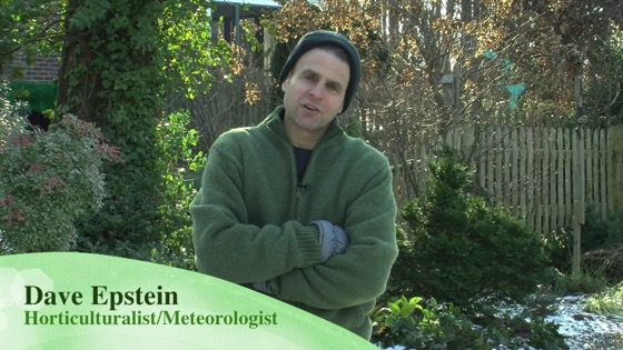 On YouTube: Winter Interests in the Landscape