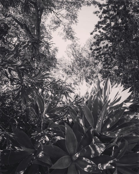 In the garden in Black and White