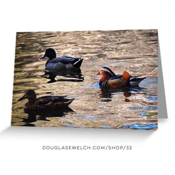 """Bring nature home with these """"Mandarin and Mallards"""" Cards, Totes, cases and more!"""