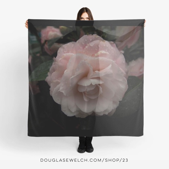 "Wrap yourself in this ""Pink Camellia"" Scarf and find much more at DouglasEWelch.com/shop"