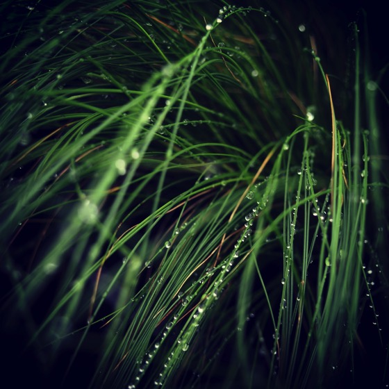 Rain on the grass