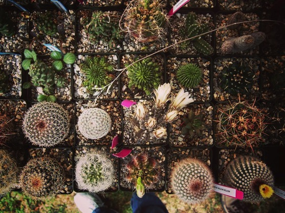 Striking Succulents and Captivating Cactus