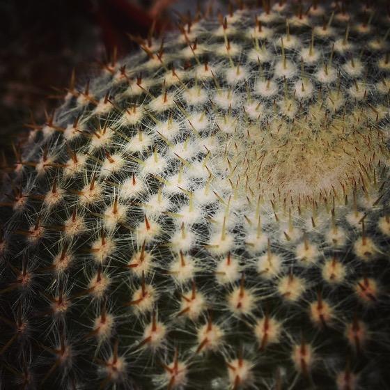 Cactus Whorl
