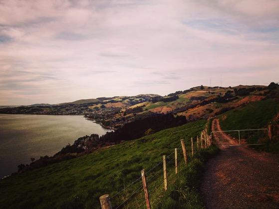 Above Otago Harbor via Instagram