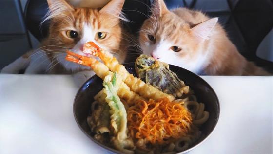 Tempura Udon Noodles via Jun's Kitchen [Video]