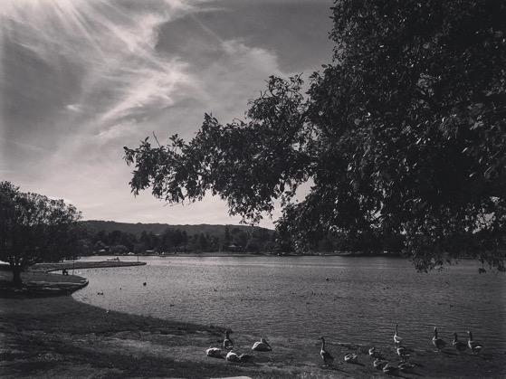 My Los Angeles 19 – Lake Balboa via Instagram