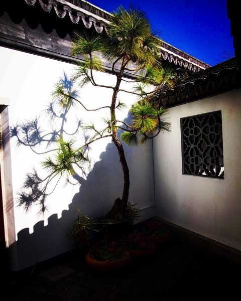 Courtyard with Pine, Dunedin Chinese Garden via Instagram