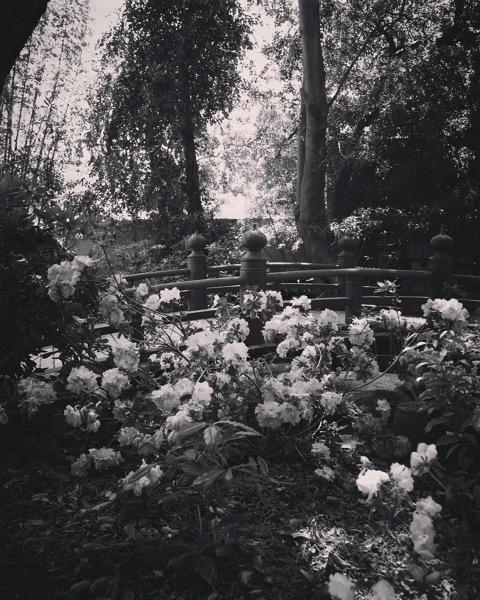 My Los Angeles 20 – Storrier Stearns Japanese Garden via Instagram