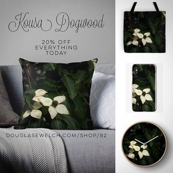 20% OFF Everything Today! – Order These Kousa Dogwood Pillows, iPhone Cases and Much More!