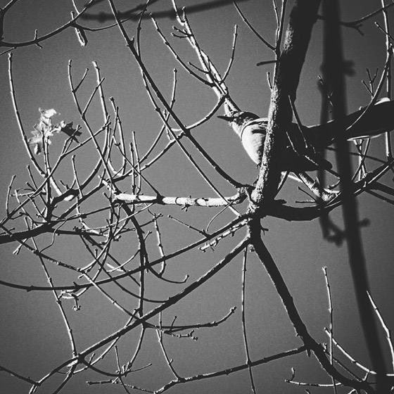 Listen to the mockingbird via My Instagram