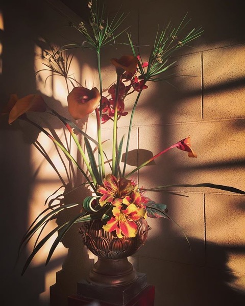 Flowers in the sun via My Instagram