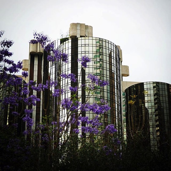 My Los Angeles 66 – Jacaranda blossoms and the Hotel Bonaventure via My Instagram