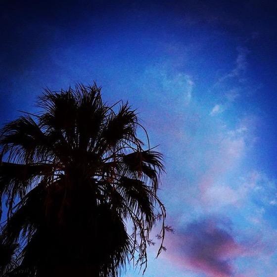 Palm and Sky via My Instagram