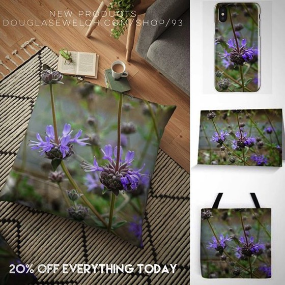 New Products – Sage/Salvia Flowers – Get these Cards, Pillows, Cases, Totes and More 20% Off Today!
