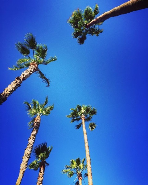 My Los Angeles 69 – NoHo Palm Trees via My Instagram
