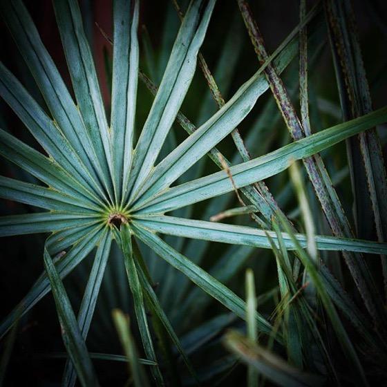 Palm Closeup via Instagram