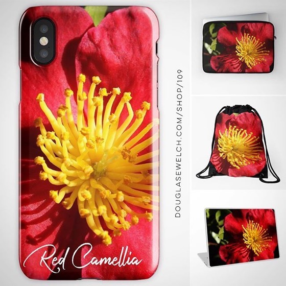 Brighten Up Your Technology with these Red Camellia iPhone Cases, Laptop Bags, Laptop Skins, and Much More!