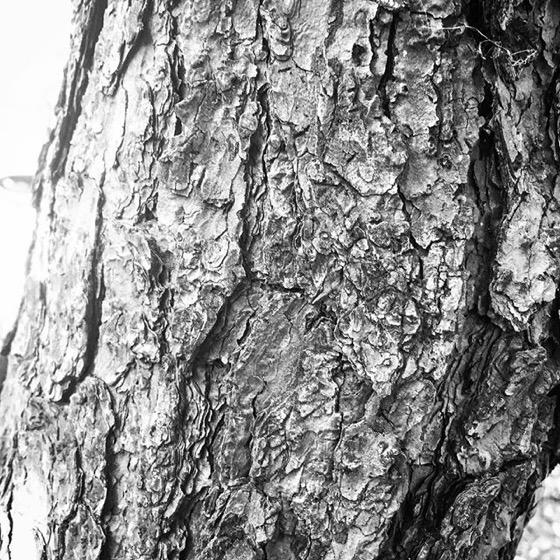 Pine bark abstract via Instagram