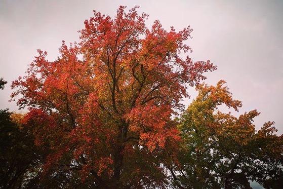 Autumn Color, Columbia, Missouri via Instagram