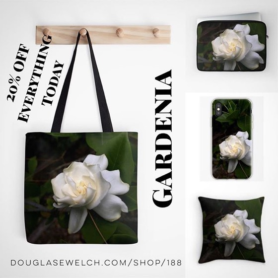 20% OFF Everything Today! – Get This Glorious Gardenia From My Garden on These Throw Pillows, Totes, Phone Cases And More! [For Sale]