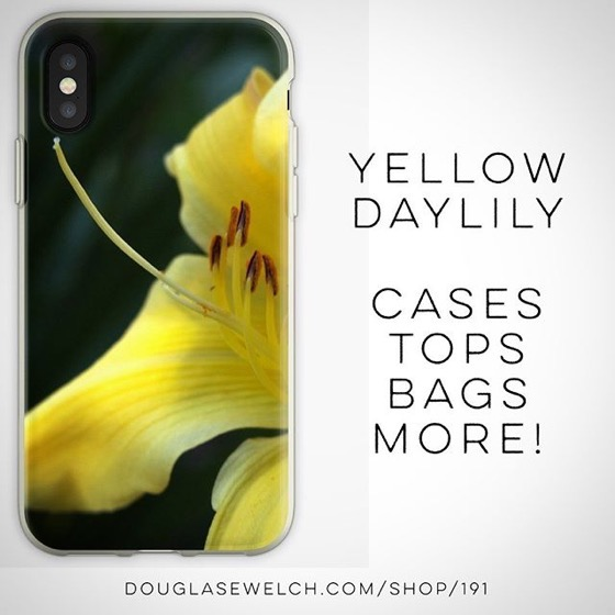 Get This Shining Yellow Daylily on These iPhone Cases And More! [For Sale]