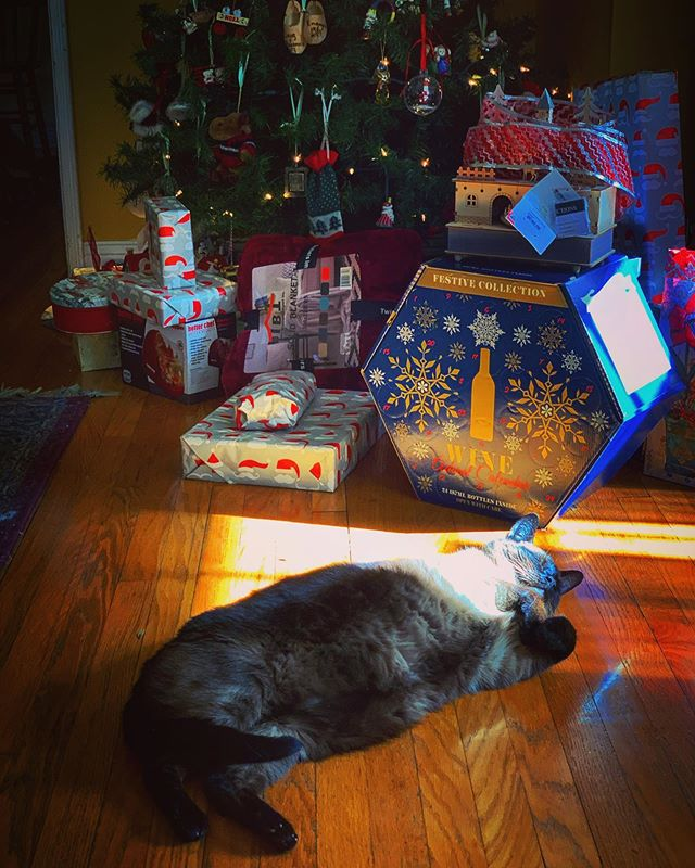 Finding That Perfect Spot of Christmas Eve Sun via Instagram