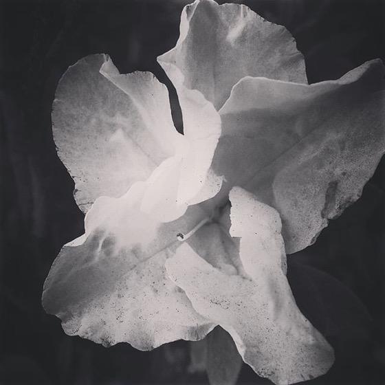 Azalea Flower via Instagram