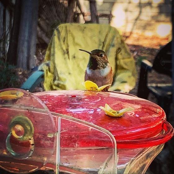 Hummingbird outside my window