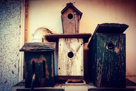 Bird and Butterfly Boxes Still Life via Instagram