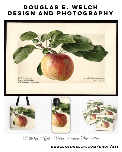 Oldenburg Apple 1919 – Vintage Botanical Print and More From Douglas E. Welch Design and Photography [For Sale]