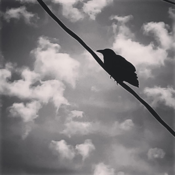 Crow and Clouds via Instagram